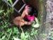 गड्ढे में गिरे कुत्ते की महिला ने बचाई जान, आंसू छलकाकर बेजुबान ने शुक्रिया कहा