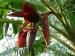 केला छोड़िए कभी केले का फूल खाया है आपने?
